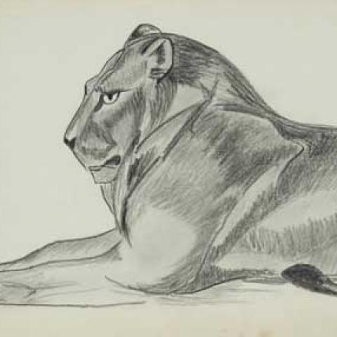 Lion couché. 1926.